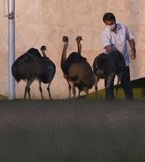 Brazil President Bitten By Large Bird During 'Horrible' COVID Quarantine