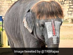 "Meet ""Bob-Cut Sengamalam"": An Elephant Famous For Her Unique Hairstyle"