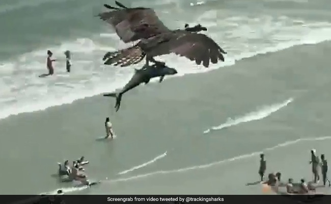 The latest in the long line of strange things we have seen in 2020 is a video of a bird flying with a large fish - which some guessed to be a small sh