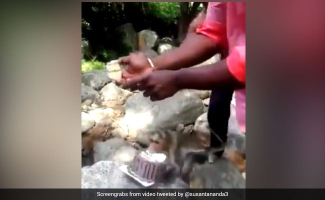 Monkey Interrupts Celebrations, Runs Away With Cake In ROFL Video