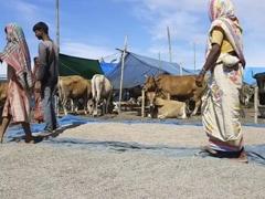 Stranded On Sliver Of High Ground: Scenes In Flood-Hit Assam