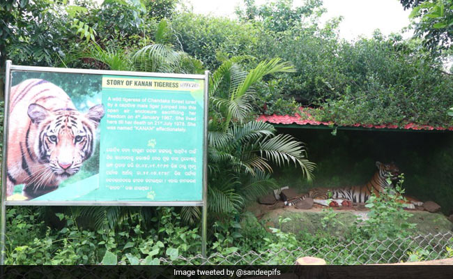 Global Tiger Day: When A Wild Tigress Jumped Into Odisha Zoo, Sacrificing Freedom For A Tiger