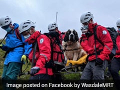 """16 People Rescue """"Embarrassed"""" St Bernard Dog From England's Highest Mountain"""