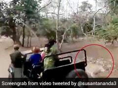 भैंस के झुंड पर Attack करने आया शेर तो जानवर ने ऐसे किया पलटवार, दुम दबाकर भागा 'जंगल का राजा' - देखें Video