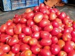 Retail Prices Of Tomato In Delhi Surge To Rs 85 Per Kg