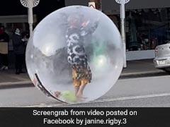 कोरोना से बचने के लिए गुब्बारे के अंदर घुसा शख्स, चीखते हुए सड़क पर दौड़ा तो डर गए लोग... देखें Video