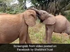 हाथी के बच्चों के बीच हुई खाने के लिए जंग, एक-दूसरे की सूंड से ऐसे छीना खाना... देखें Viral Video