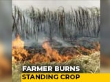 Video : No Mill Amid Lockdown, Punjab Farmer Burns Sugarcane Field