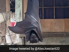 "The Truth Behind This Viral Pic Of A ""Human-Sized"" Bat"
