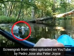 Caught On Camera: Alligator Charges At Kayak, Knocks Man Into Water