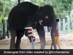 टांग कटने के बाद भी हाथी ने नहीं हारी हिम्मत, बॉलीवुड डायरेक्टर ने शेयर किया Video