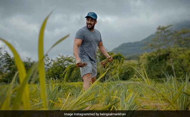 सलमान खान ने अपने फार्म हाउस पर उगाई फसल, Photo शेयर कर बोले- दाने-दाने पर लिखा होता है खाने वाले का नाम...