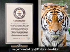 India's 2018 Tiger Census Makes It To Guinness World Records