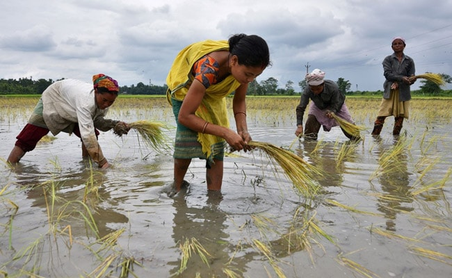 India's Crop Planting Rises Nearly 14% On Early Monsoon