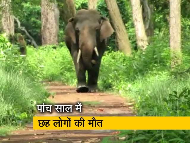 Videos : देस की बात रवीश कुमार के साथ: जंगली हाथी और इंसानों का संघर्ष