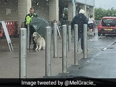 Security Guard Hailed A Hero For Sheltering Dog From Rain