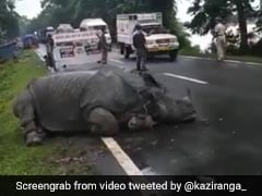 Watch: Tired Rhino Sleeps On Road At Flood-Hit Kaziranga, People Pass By Quietly