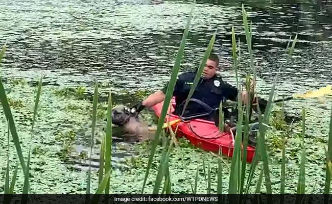 नदी में डूब रहा था कुत्ता, बचाने के लिए पुलिसवाला पहुंचा नाव में और ऐसे किया रेस्क्यू... देखें Viral Video