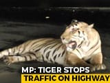 Video : Viral Video: Tiger Stops Traffic On Highway In Madhya Pradesh | NDTV Beeps