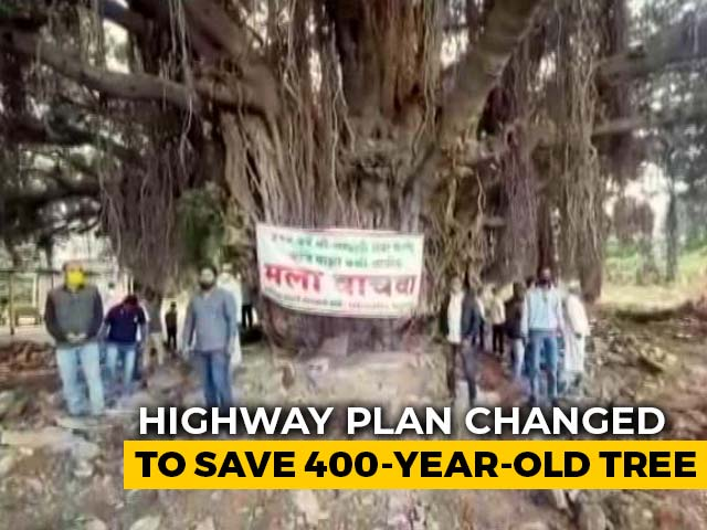 "Video : ""Keeper Of Legends"": Highway Plan Changed To Save 400-Year-Old Tree"