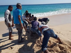 10 Dead Whales Found On Indonesian Beach, 1 Saved By Locals