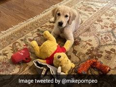 अमेरिकी विदेश मंत्री ने खिलौने से खेलते हुए अपने कुत्ते की फोटो की ट्वीट, चीन के लोगों का यूं आया रिएक्शन