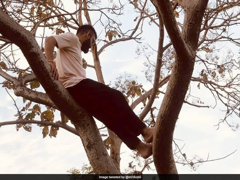 """Virat Kohli Shares Throwback Picture Of When He Could """"Climb Up A Tree And Chill"""""""
