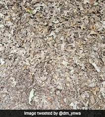You Have 15 Seconds To Find The Snake In This Pic. Ready, Steady, Go...
