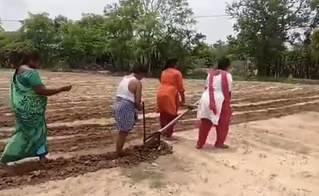 चंद्रबाबू नायडू आंध्र के किसानों की बेटियों की शिक्षा का ख्याल रखने के लिए