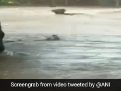 Dramatic Video Shows Cattle Washed Away In Flood Water In Gujarat