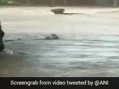 गुजरात के राजकोट में तेज बारिश से आई ऐसी बाढ़, पानी में बह गया भैंसों का झुंड, देखें VIDEO