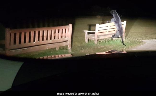 देर रात पार्क के बेंच पर चढ़ रहा था ब्लैक पैंथर, लेकिन पुलिस के पहुंचते ही हुआ कुछ ऐसा.. देखें Photo