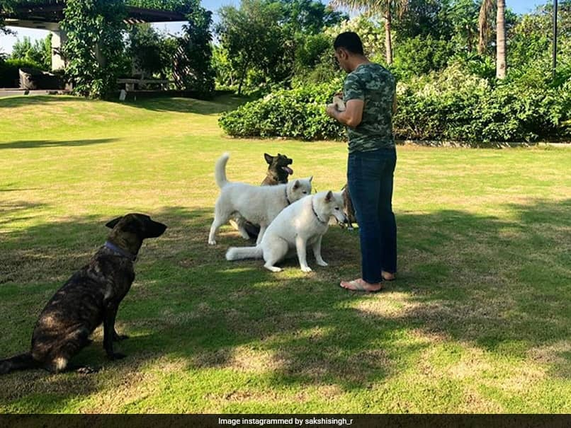 MS Dhoni Says No To Brand Endorsements Amid COVID-19, Keeps Busy With Organic Farming