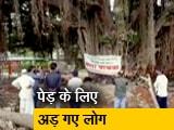 Video : 400 साल पुराने पेड़ को बचाने के लिए हाईवे प्रोजेक्ट में किया गया बदलाव