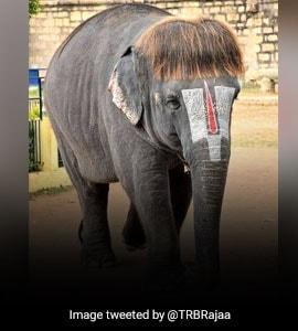 हाथी के हेयरस्टाइल ने सोशल मीडिया पर मचाया तहलका, दिन में तीन बार होती है बाल की सफाई