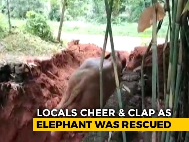Video : Elephant Rescued After Falling Into An Open Well In Kerala