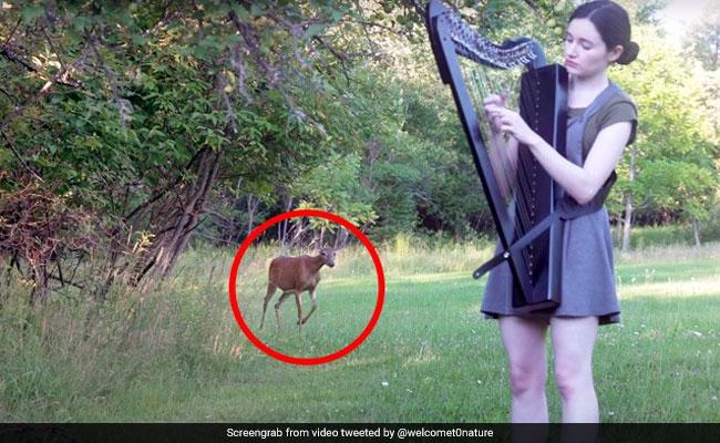 लड़की बजा रही थी म्यूजिक, अचानक पीछे आकर खड़ा हो गया हिरण और फिर... देखें Viral Video
