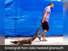 स्कूल में घुसा मगरमच्छ तो शख्स ने पूंछ पकड़कर किया कुछ ऐसा, चीख पड़े बच्चे - देखें Viral Video