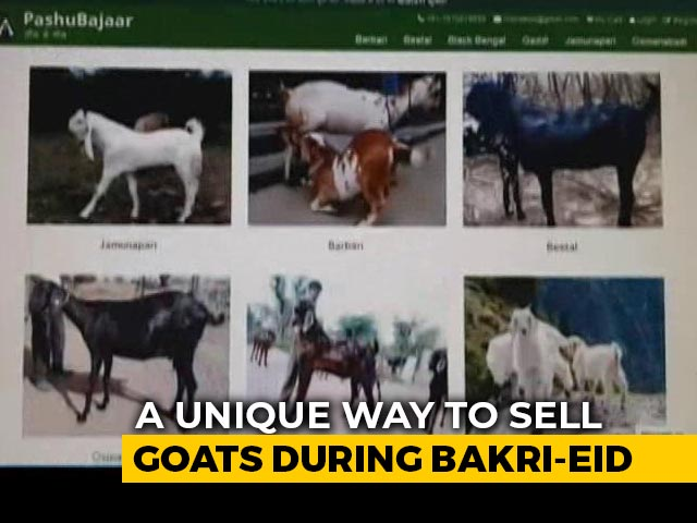 Video : New Normal: Goats Sold Online Ahead Of Bakri-Eid