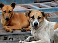 Nagaland Bans Dog Meat After Uproar On Internet