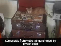 बीयर बार के अंदर घुसी बिल्ली, मुंह में दबाए नोटों के बंडल और फिर किया ऐसा... देखें Viral Video