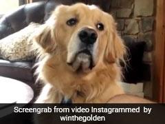 भूखे कुत्ते के सामने मालिक ने खाया खाना तो जानवर ऐसे देखने लगा घूरकर, देखें Viral Video
