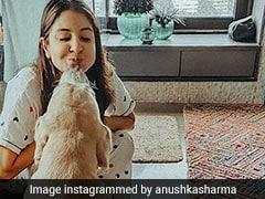 "Virat Kohli All-Heart For Anushka Sharma's Pictures With ""Sweet-Smoosh-Doggo Dude"""