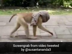 कोरोना के 'डर' से बंदर ने पहना मास्क, ऐसे सड़क पर लगाने लगा दौड़... देखें Viral Video
