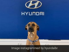 Viral: Hyundai Showroom Adopts Street Dog, Makes Him Car Salesman