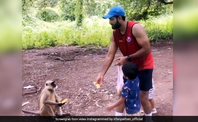 इरफान पठान ने बंदर को फेंका केला, कैच पकड़ते ही हुआ कुछ ऐसा... देखें Viral Video