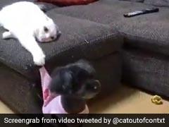 भागने के लिए जैसे ही खड़ा हुआ कुत्ता, बिल्ली ने पीछे से पकड़ी उसकी टी-शर्ट और फिर... देखें Video