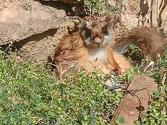 करीब 70 साल पहले विलुप्त मान ली गई उड़ने वाली दुर्लभ गिलहरी उत्तराखंड के जंगलों में दिखी