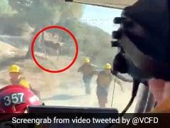 आग बुझा रहे थे फायर फाइटर्स, तभी गुस्से में अटैक करने आ गया सांड और फिर... देखें खतरनाक Video