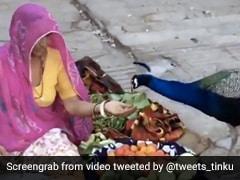 सब्जी बेचने वाली महिला के पास पहुंचा भूखा मोर, हाथ से इस तरह खिलाया खाना... देखें Video